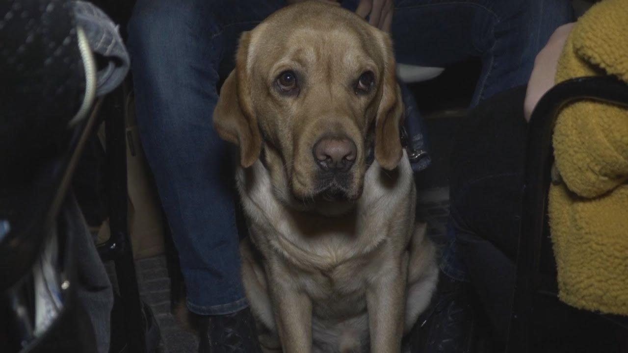 Το Κέντρο «Σκύλοι Οδηγοί Ελλάδος» παρέδωσε τον Najak στον Χρήστο