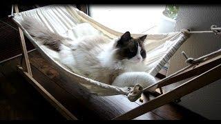 Cat Enjoys His Hammock