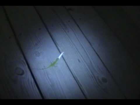 Lizard Smoking a Cigarette