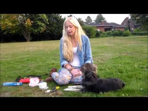 Clicker! Wie konditioniere ich meinen Hund auf den Clicker? Clickertraining! Hundekanal!