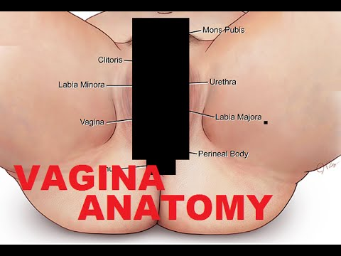 Vagina Anatomy And Female Reproductive System