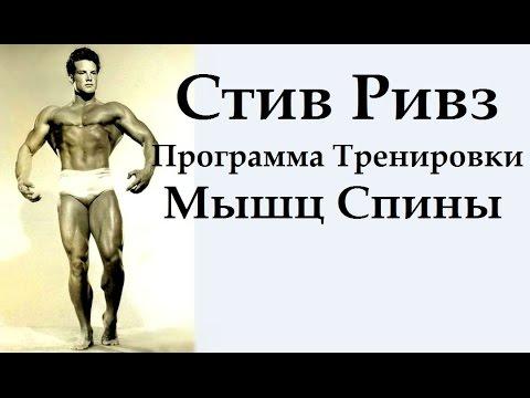 Большая грудная мышца прикрепляется