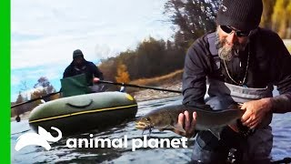 Cameraman Needs Rescuing While Crew Fish For Giant Taimen | Fish Or Die by Animal Planet
