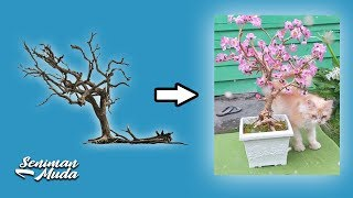 Video MAKE BONSAI FROM TREE BRANCH MP3, 3GP, MP4, WEBM, AVI, FLV Agustus 2019