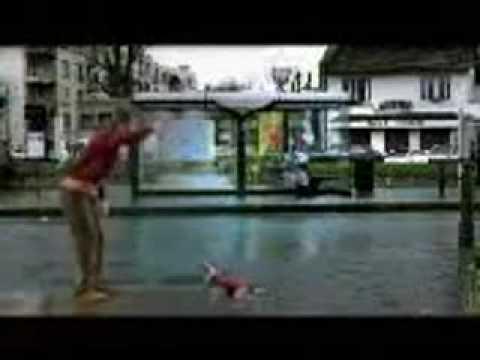 funny dog ad