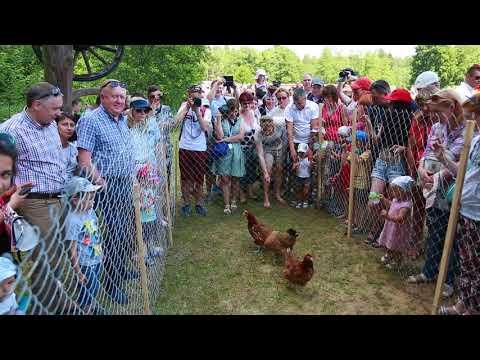 Куриные бега на Августовском канале