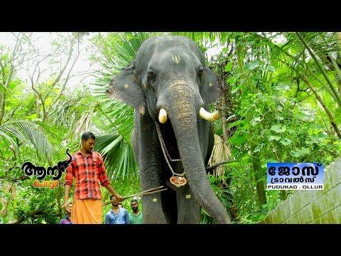 Video Akkikavu karthikeyan  ( aana peruma -24 ) download in MP3, 3GP, MP4, WEBM, AVI, FLV January 2017