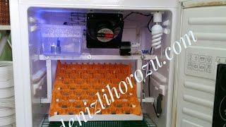 Buzdolabından Full Otomatik 54 gelişim + 54 çıkım = 108 lik Kuluçka Makinası Yücel Işık yclkuluçka www.denizlihorozu.com 05359452286