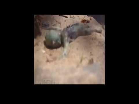 trovato un bambino di sirena sulla spiaggia: video shock!