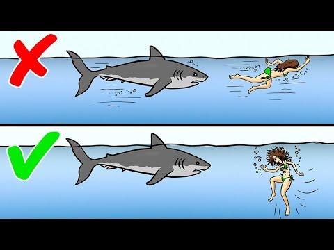 13 Советов, Как Пережить Нападение Диких Животных (видео)