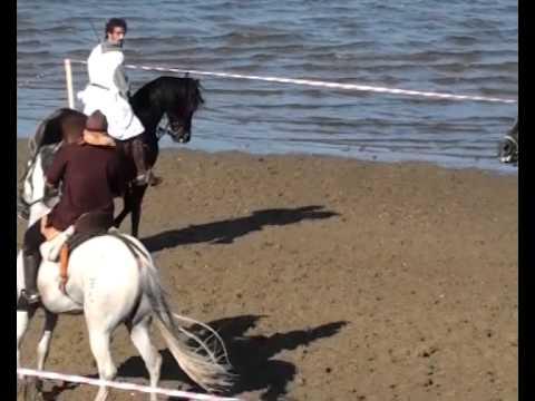 Doma de caballos (IV) - XI Mercado Medieval