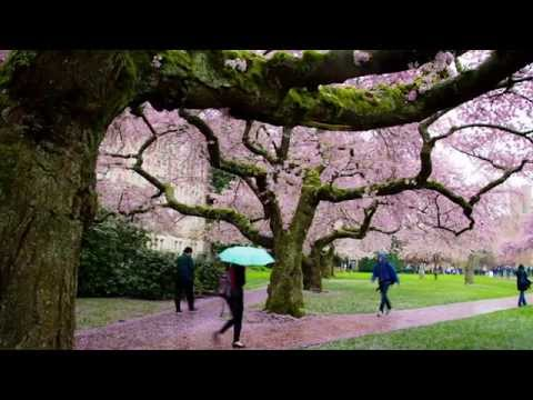 Video Thumbnail - Teaching Philosophy