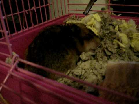 peanut is sick :'( (labored breathing)