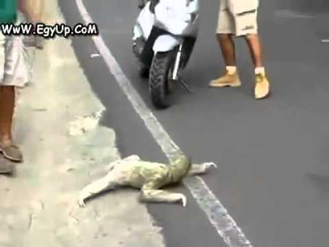 strano animale mutante attraversa la strada