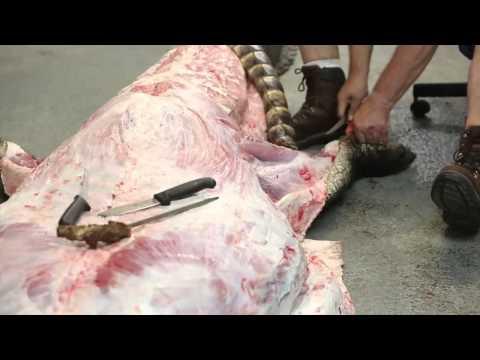 這位阿伯捕獲了「打破世界紀錄的巨鱷」後立馬剝皮解剖,結果竟在鱷魚肚子裡看到咋舌的東西…