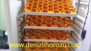 El Yapımı Buzdolabından Full Otomatik Kuluçka MakinesiYCL-378  216 Gelişim + 162 ÇıkımYücel IŞIK - 0 535 945 22 86 DENİZLİhttp://www.denizlihorozu.com/     tıklayın