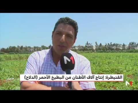العرب اليوم - شاهد: إنتاج آلاف الأطنان من البطيخ الأحمر في القنيطرة