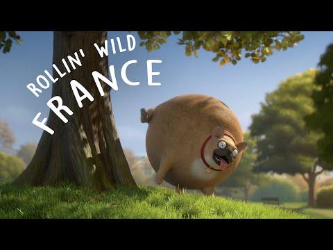 Hilarious Round Animals are No Good