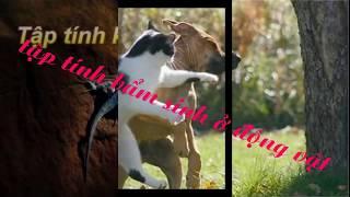 tập tính bẩm sinh ,tập tính học được ở động vật!!