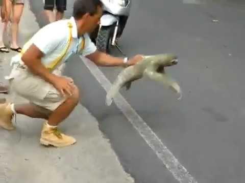 樹懶爬得比烏龜慢,幫牠飛吧!