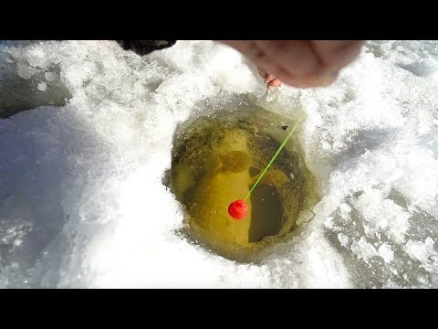 Epic Ice Fishing BATTLE With 20lb+ Monster! (видео)