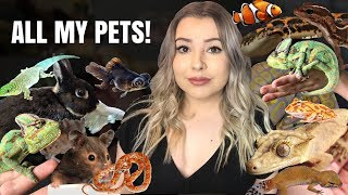 ALL MY PETS IN ONE VIDEO! (Meet My Pets! Again...) by Emma Lynne Sampson