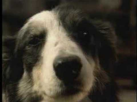 Budweiser Commercial from the 2000 Super Bowl with a cute dog