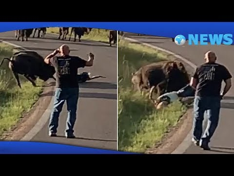 ✅  Bison drags and tosses woman around before ripping off her pants