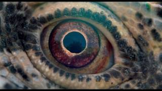 Nonton Dub                                                        Voyage Of Time Life S Journey 2017 Film Subtitle Indonesia Streaming Movie Download