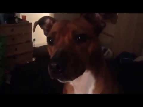 Ma wee Mitzi xxx hehe (видео)