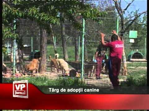 Târg de adopții canine