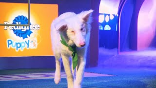 Puppy Profile: Moonshine the Border Collie | Puppy Bowl XIV by Animal Planet
