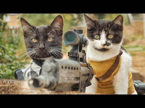 Cats+Machine Guns+Zombies = Cinematic Excellence
