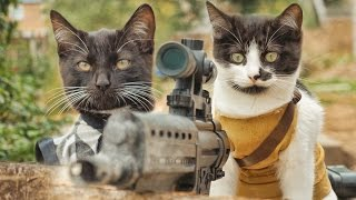 Video Cats vs Zombies MP3, 3GP, MP4, WEBM, AVI, FLV September 2017