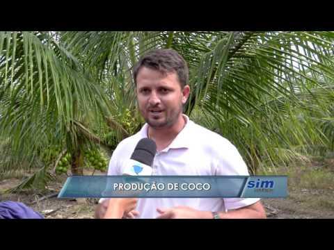 Produção de coco em Linhares