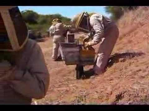 Chilean Beekeeping