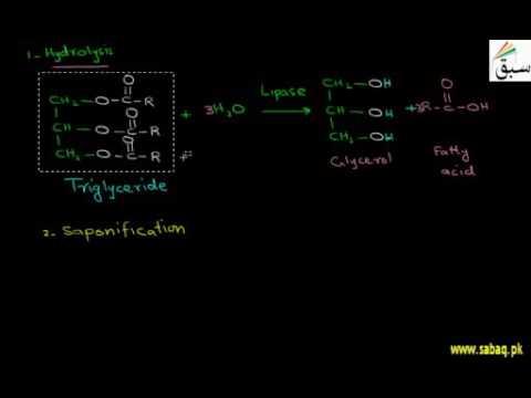 Chemical Properties of Lipids