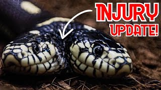 TWO HEAD SNAKE INJURY UPDATE!! GREEN ANACONDA AND BABY ALBINO CARPET PYTHONS!! | BRIAN BARCZYK by Brian Barczyk