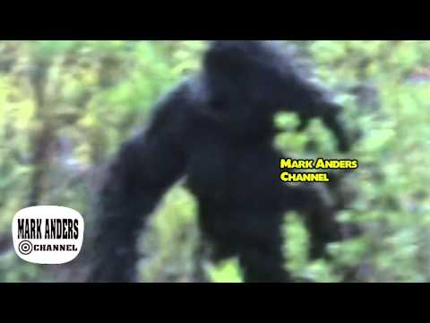 Review of a Possible Bigfoot Sighting in Oklahoma