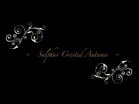 Sulphur Crested Autumn