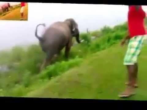 Rambo Elephant attack in udawalawe dam