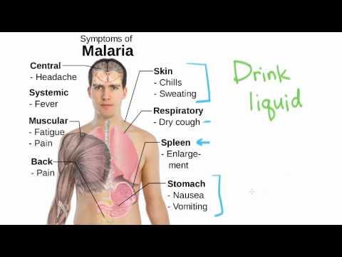 Health: Malaria