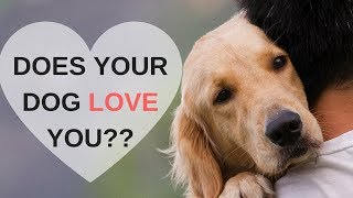 Video 8 Ways to Know Your Dog Loves You MP3, 3GP, MP4, WEBM, AVI, FLV Agustus 2019
