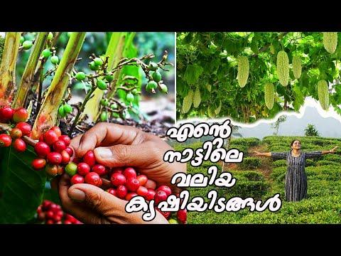 എന്റെ നാട്ടിലെ വമ്പൻ കൃഷിയിടങ്ങൾ കാണണോ... | Village farming in Wayanad | Come on everybody