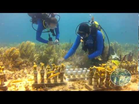 EcoTech Sponsors the Coral Restoration Foundation