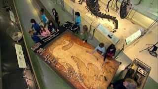 """Video How to Find Your Dragon (a """"How to Train Your Dragon"""" special feature) MP3, 3GP, MP4, WEBM, AVI, FLV Juni 2018"""