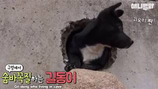 Video A dog which likes to play hide-and-seek MP3, 3GP, MP4, WEBM, AVI, FLV Juli 2018