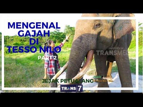 JEJAK PETUALANG | MENGENAL GAJAH DI TN TESSO NILO 2-3