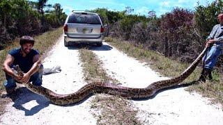 4. Python hunters take on Florida Everglades' snake problem