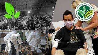 Chăn nuôi | Bệnh lây nhiễm từ vật nuôi sang người: Hiểm họa khó lường -  Phần 1